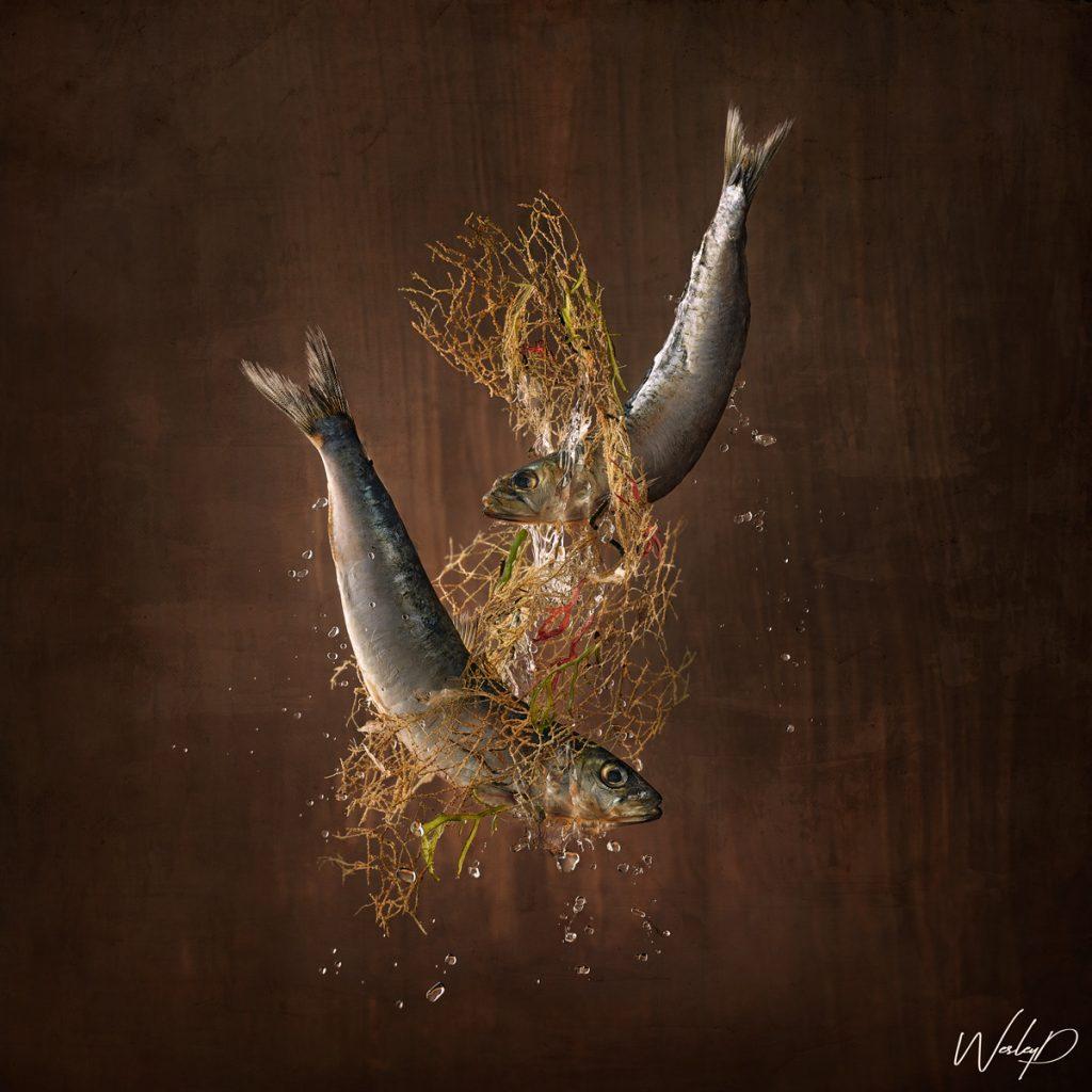 MARINE SPECIES 'Sardines'